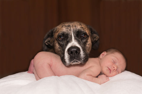 dog and infant