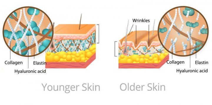 Skin Longevity with Snow Algae, a Featured Active in Skin Management System by Dr. Strauss