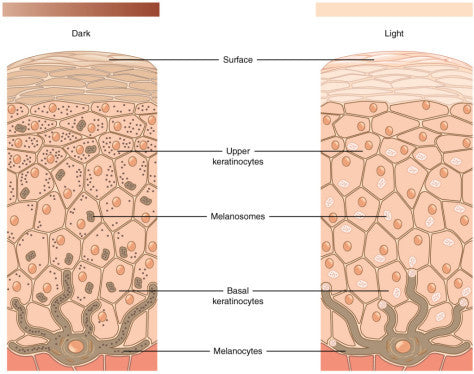 Age Spots and Hyperpigmentation: Why do they develop? – Skin Management System by Dr. Strauss