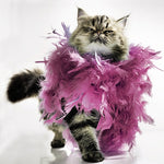 Cat With Feather Boa