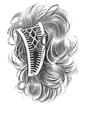 Image of the Banana-Comb-Ponytail