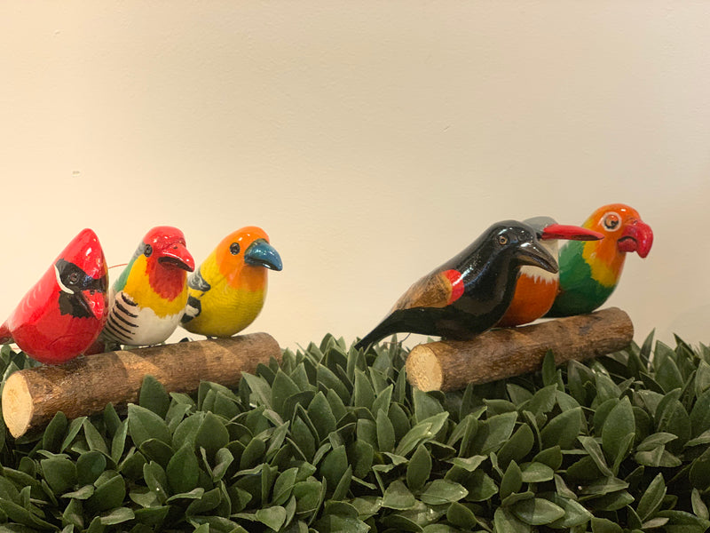 Mystery Birds on a log