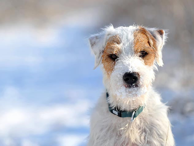 How can the Cold Weather Affect your Pet?