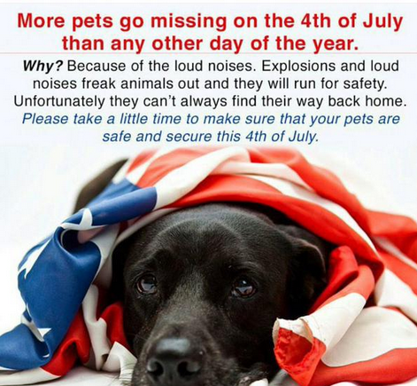 Tips for Safely Celebrating the 4th of July with your Pets