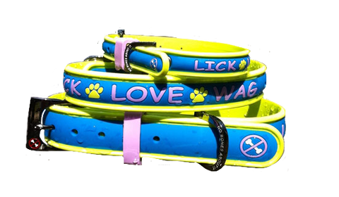 No Bones About It - Lick Love Wag Dog Collars Island Blue