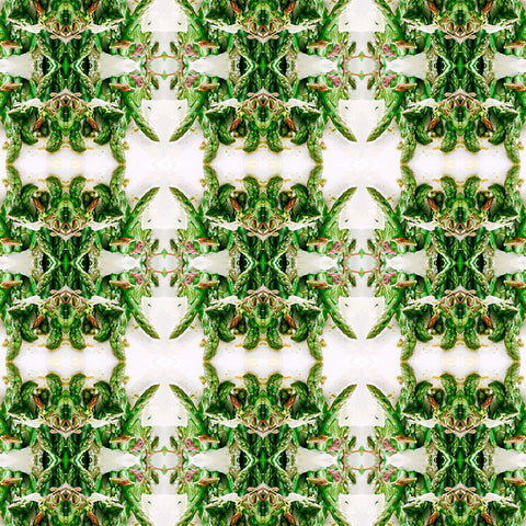 Print of Asparagus Kaleidoscope | Fresh Food Prints