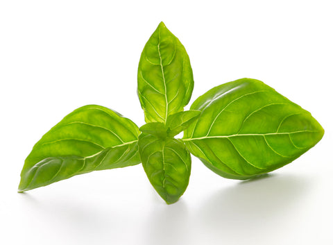 Print of basil on white background | Fresh Food Prints