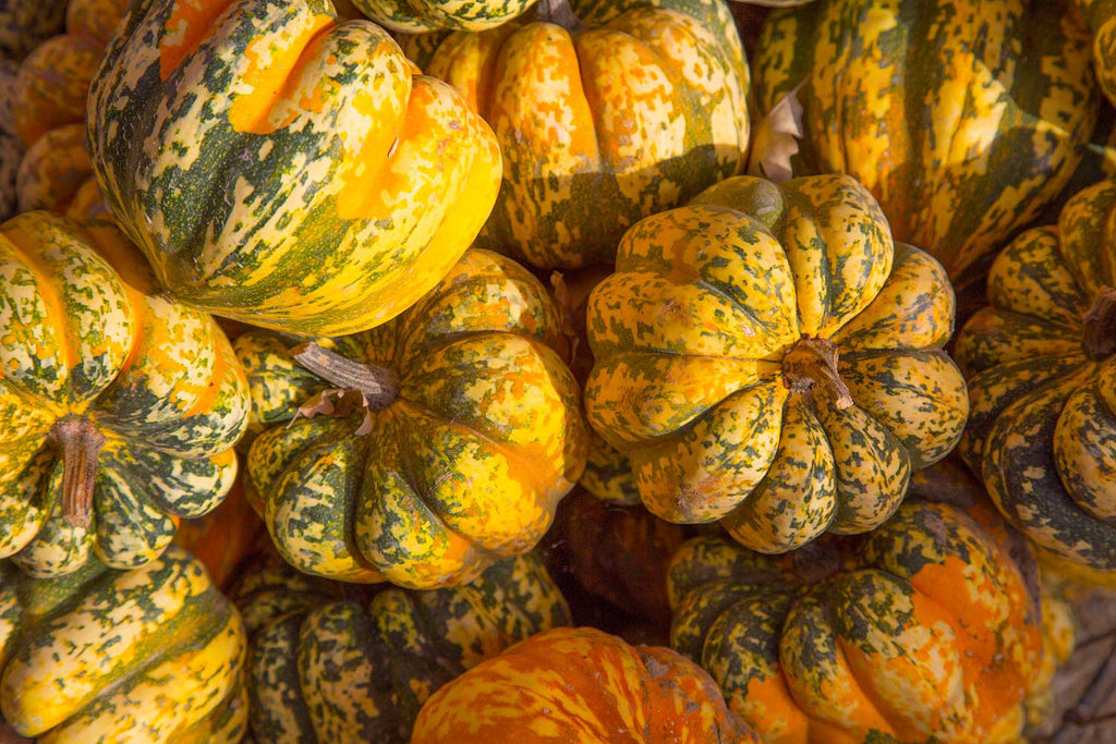 Print of Carnival Squash | Fresh Food Prints