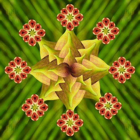 Print of fig and asparagus kaleidoscope of food | Fresh Food Prints