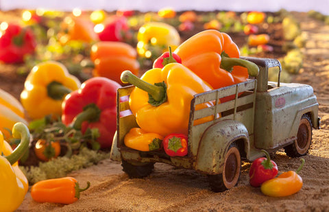 Print of bell pepper farm | Fresh Food Prints