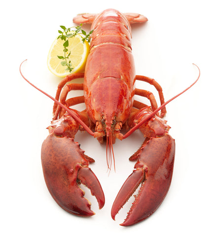 Print of cooked Maine lobster | Fresh Food Prints