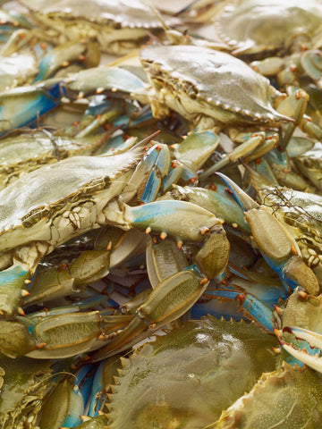 Print of Maryland Blue Crabs | Fresh Food Prints