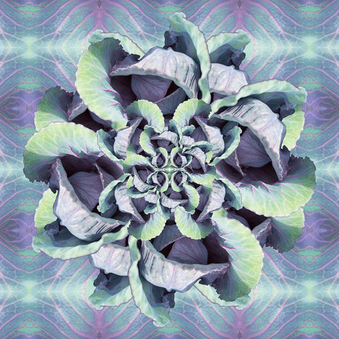 Print of Red Cabbage Kaleidoscope of Food | Fresh Food Prints