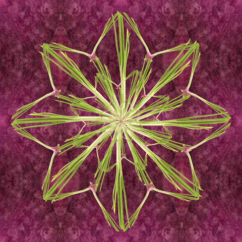 Print of scallion star kaleidoscope of food | Fresh Food Prints