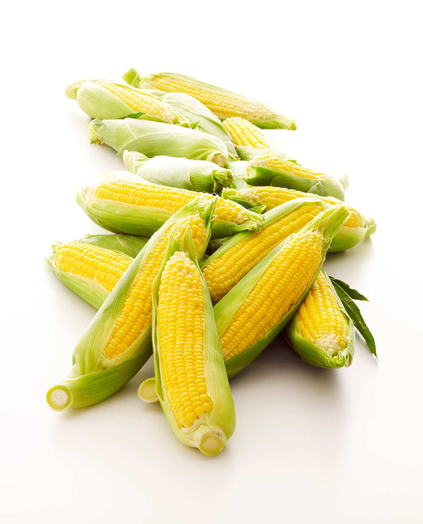 Print of Ears of Yellow Corn on White Background
