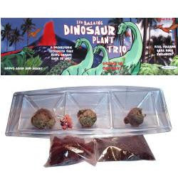 Grow Your Own Dinosaur Plant Trio - Off The Wall Toys and Gifts