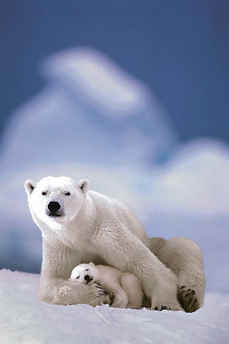 A Polar Bear and Its Cub - Wildlife Poster, 24x36