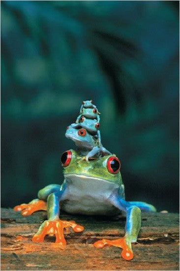 Adult & Baby Frogs - Wildlife Poster, 24x36 - Off The Wall Toys and Gifts