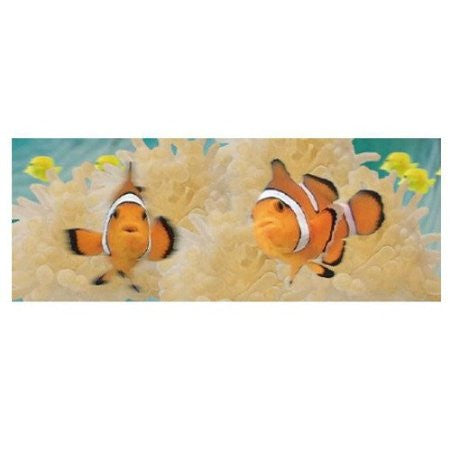 Animated Clown Fish Bookmark - Ruler By Emotion Gallery