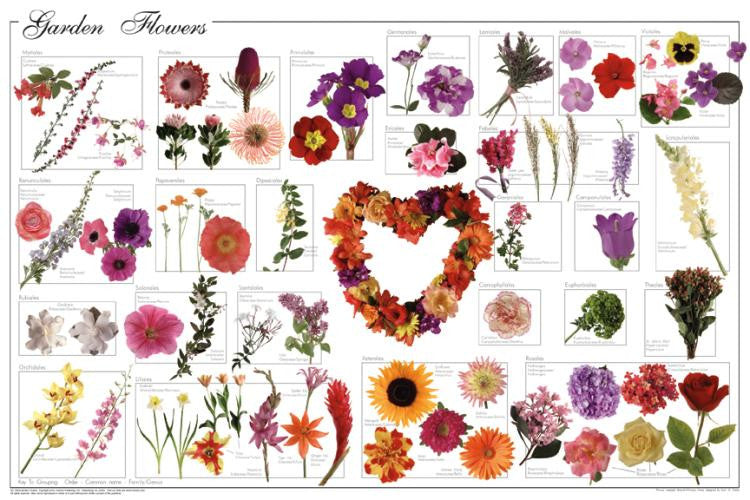 Gorgeous Laminated Garden Flowers Poster 24x36 - Off The Wall Toys and Gifts