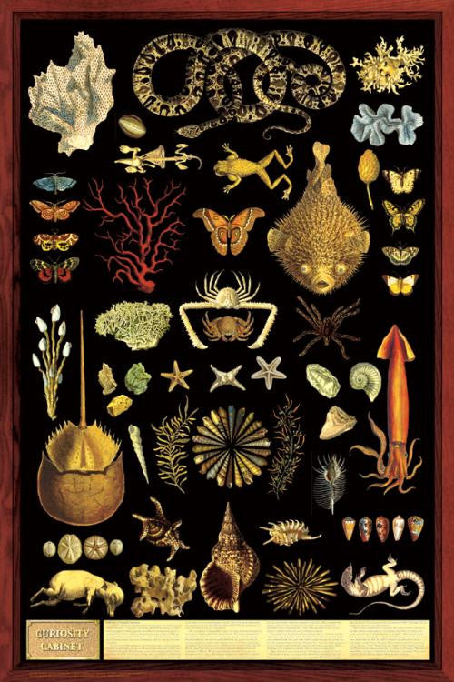 Laminated Curiosity Cabinet Poster 24x36 - Off The Wall Toys and Gifts