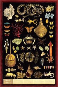 Curiosity Cabinet Poster 24x36 - Off The Wall Toys and Gifts
