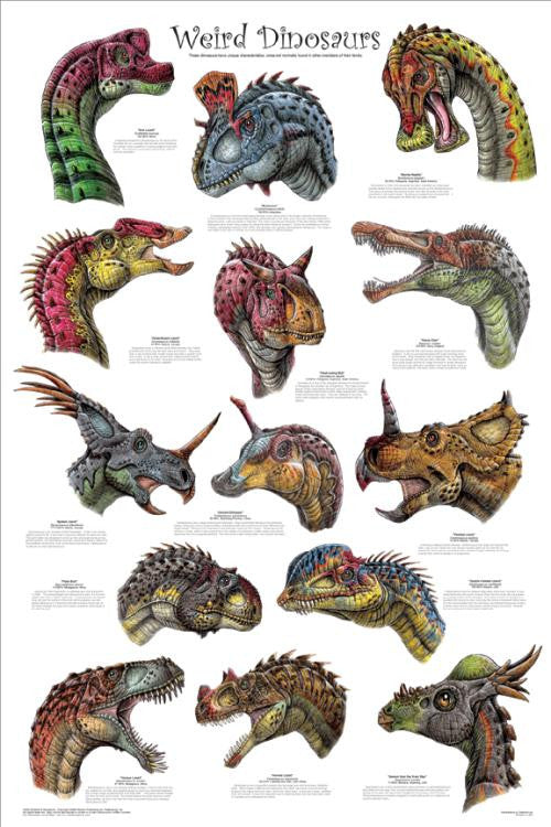 Weird Dinosaur Poster 24x36 - Off The Wall Toys and Gifts