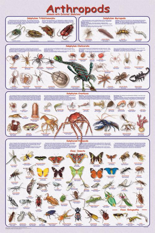 Laminated Arthropods Poster 24x36 Easy to Use - Off The Wall Toys and Gifts
