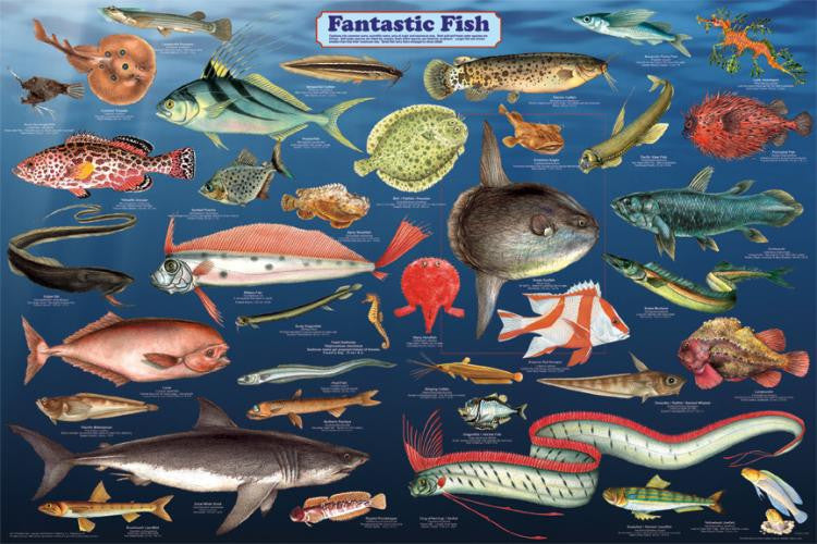 Amazing! Laminated Fantastic Fish Poster 24x36 - Off The Wall Toys and Gifts