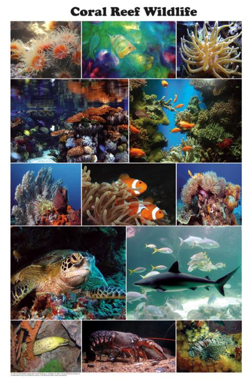 Beautiful! Coral Reef Wildlife Poster 24x36  Photo  Montage