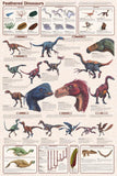 Feathered Dinosaurs Poster 24x36 - Off The Wall Toys and Gifts