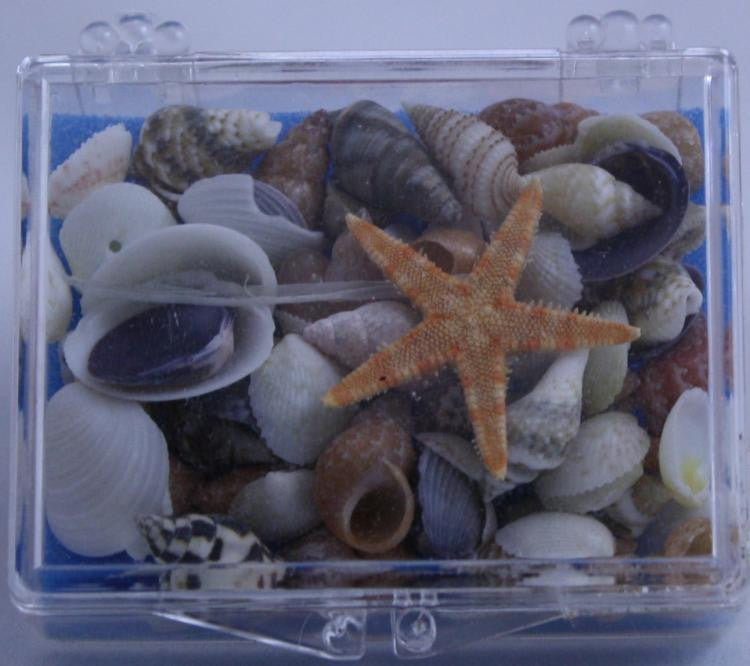 Shore Shells Seashells - Off The Wall Toys and Gifts