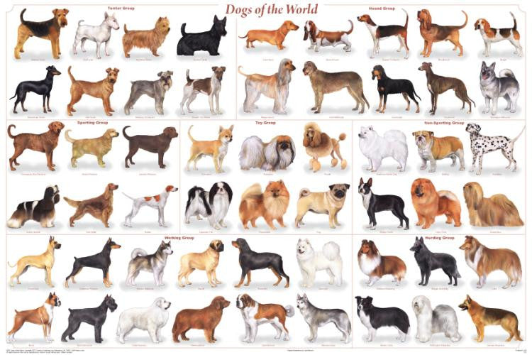 Laminated Dogs of the World Poster 24x36 Canis lupus - Off The Wall Toys and Gifts