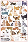 Cats of the World Poster 24x36 Felis silvestris catus - Off The Wall Toys and Gifts