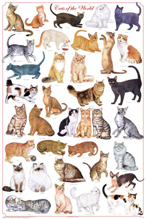 Laminated Cats of the World Poster 24x36 Felis catus - Off The Wall Toys and Gifts