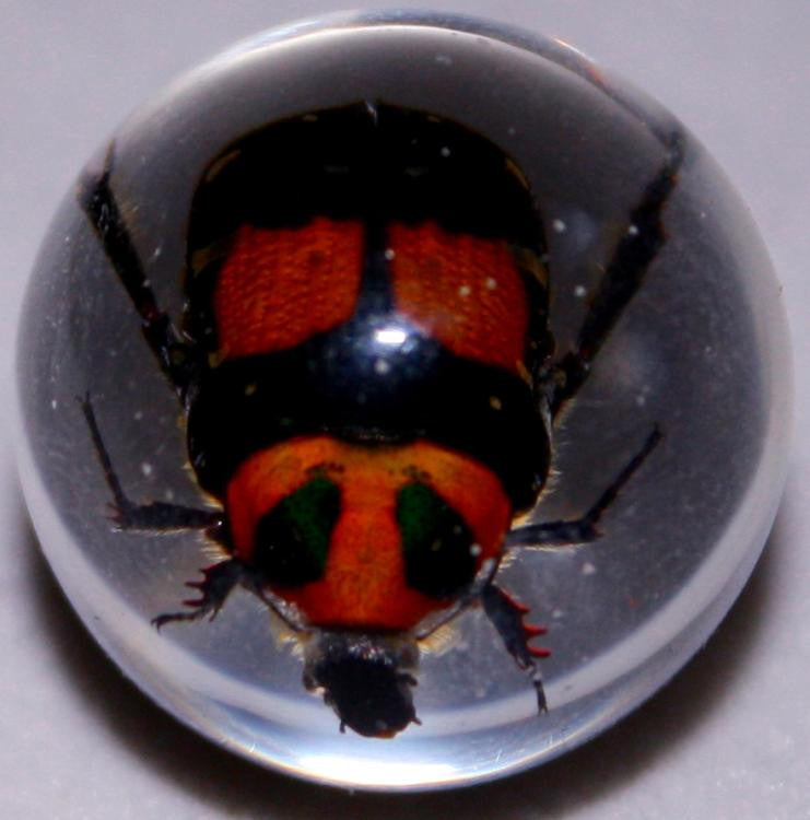 "3/4"" Lucite Embedment Marble with Flower Scarab Beetle- Bug Inside - Off The Wall Toys and Gifts"