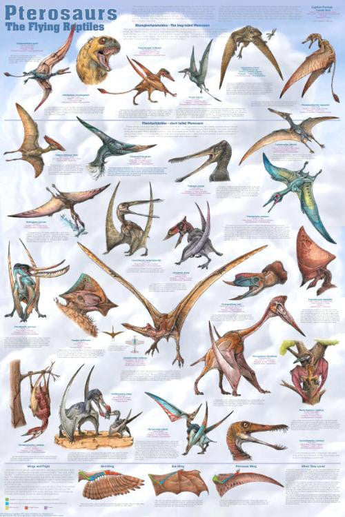 Pterosaurs Dinosaurs Poster 24x36 - Off The Wall Toys and Gifts