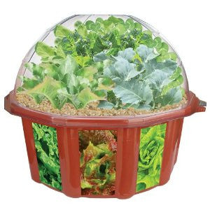 Sprout 'n Eat Salad Machine Plant Growing Seeds & Terrarium Kit - Off The Wall Toys and Gifts