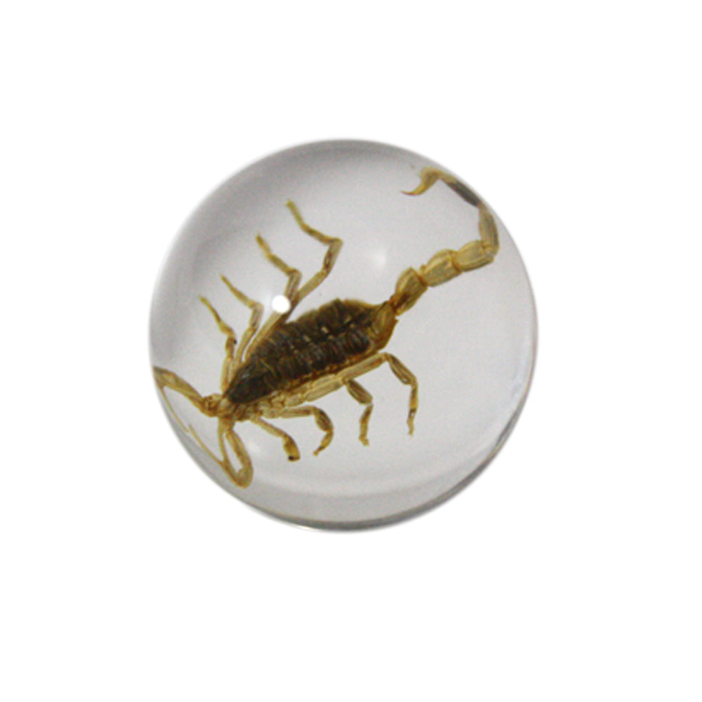"3/4"" Lucite Embedment Marble with Golden Scorpion- Bug Inside"