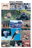 African Wildlife Poster 24x36 Photo Montage - Off The Wall Toys and Gifts