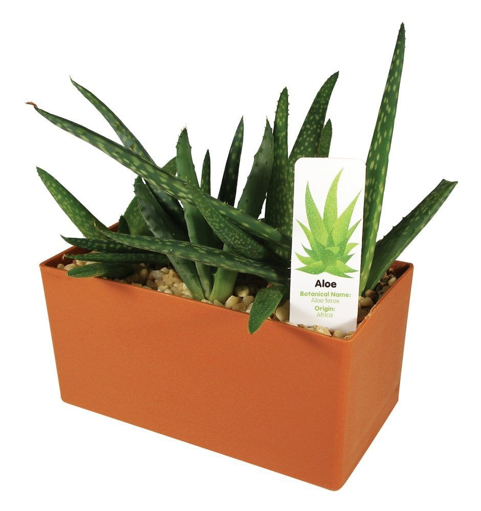 Plants That Work Indispensable Aloe Plant Cube - Off The Wall Toys and Gifts