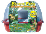 Banana Farm Windowsill Greenhouse Kit w/Seeds - Off The Wall Toys and Gifts