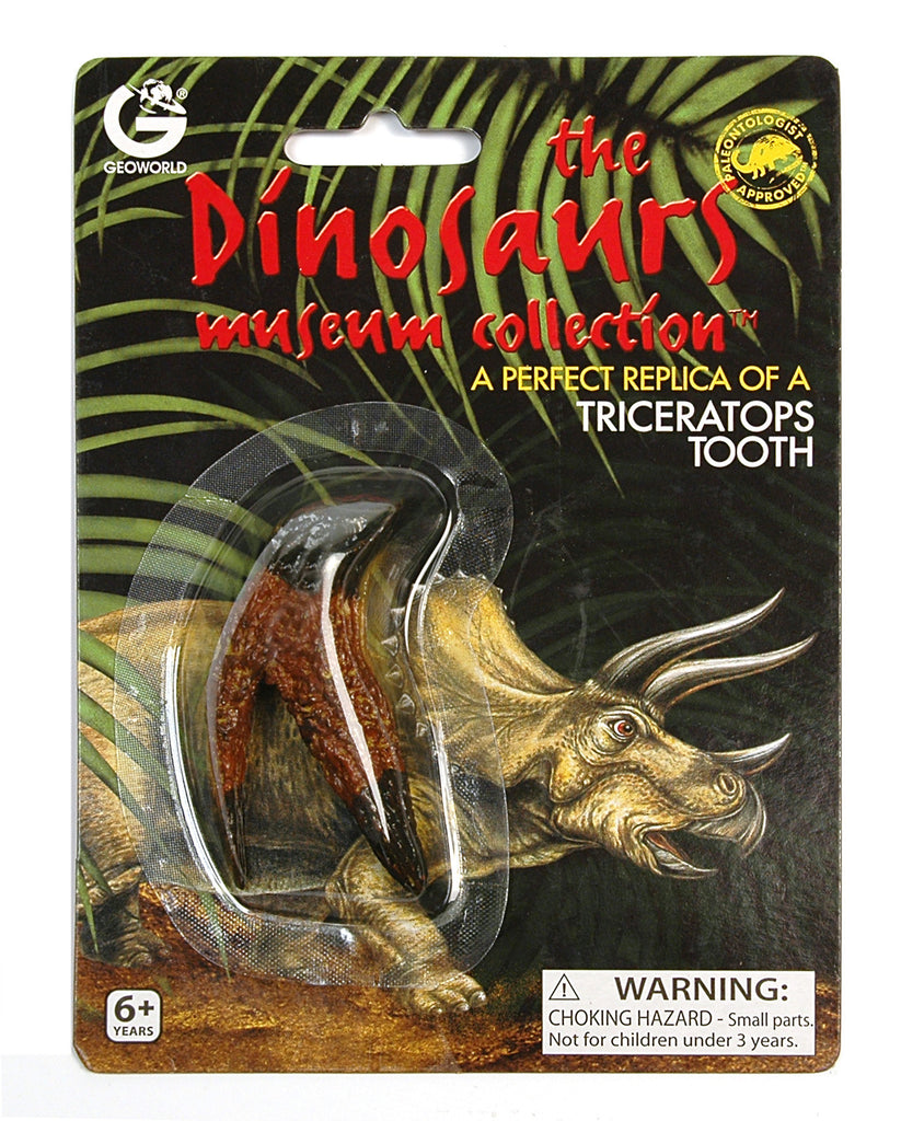 Triceratops Tooth Replica - Dinosaur Tooth Perfect Replica by Geoworld