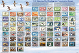 Duck & Migratory Bird Stamps Poster Chart - Off The Wall Toys and Gifts
