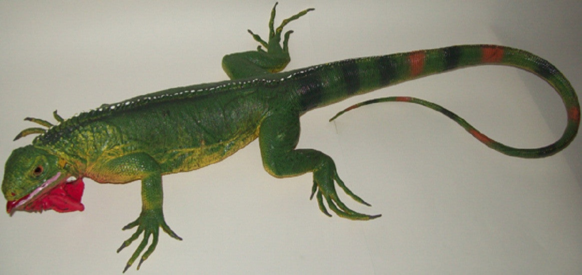 40 Inch Realistic Rubber Lizard Replica - Common Green Iguana - Off The Wall Toys and Gifts