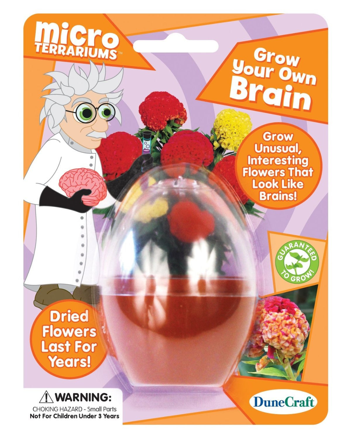 Grow Your Own Brain Micro Terrarium w/Seeds - Off The Wall Toys and Gifts