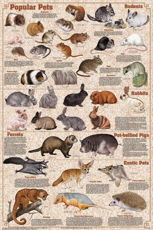 Laminated Popular Mammals Pets Poster Rabbits Rodents 24x36 - Off The Wall Toys and Gifts