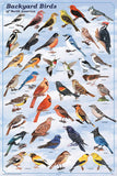 Laminated Backyard Birds Poster-30 Species-24x36 Special Price - Off The Wall Toys and Gifts