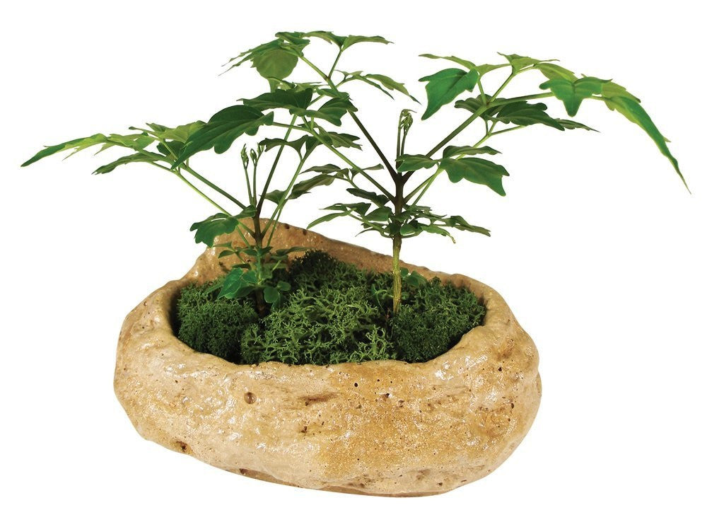 Rainforest Rock Garden Grow From Seed Indoor Plant - Off The Wall Toys and Gifts