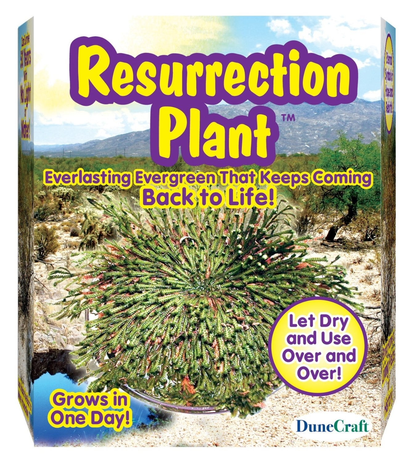 Resurrection Plant, Dinosaur Plant Kit - Off The Wall Toys and Gifts